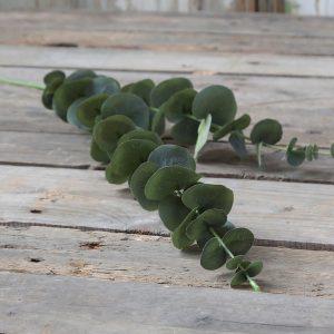 eukalyptuksen oksa