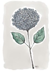 sininen hortensia